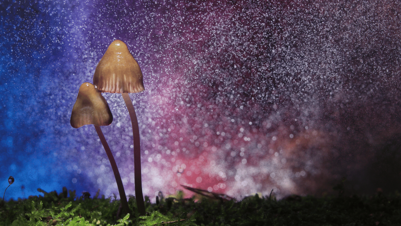 Canada The New Hub for Hallucinogens