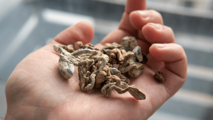 """Patients Hope for New Regulations and Exemptions Surrounding """"Shroom Therapy"""""""